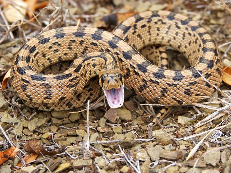 Kígyókultusz a világban